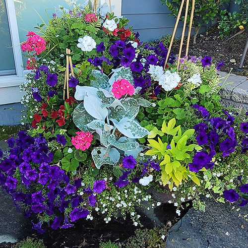 Good Our Container Gardening Services In Seattle Assure Aesthetics And Knowledge  Come Together To Create Lovely Container Gardens.