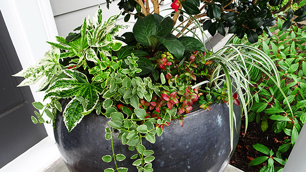 Fall Gallery Container Planting Ideas