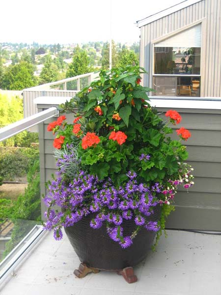 Container Planting Ideas Spring Gallery Of Container Plantings