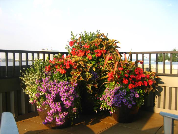 Container planting ideas spring gallery of container plantings the best flowers for beautiful flower pots unify the planting this group of three containers repeats the same flower and foliage colors mightylinksfo